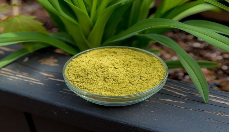 Best Henna powder in India