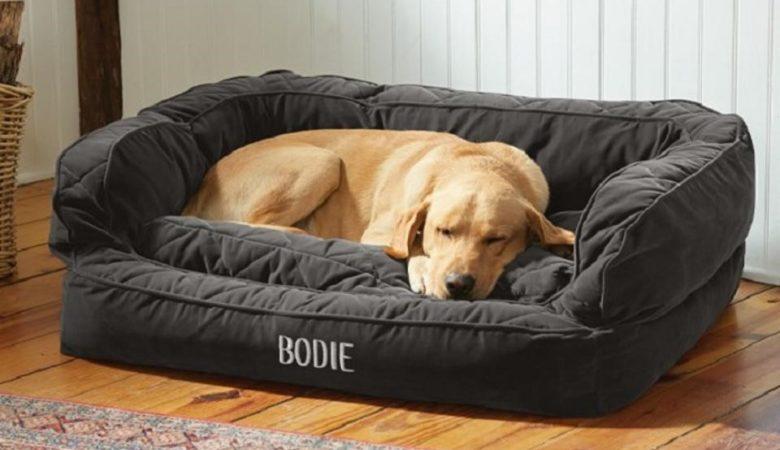 Best Dog Beds in India
